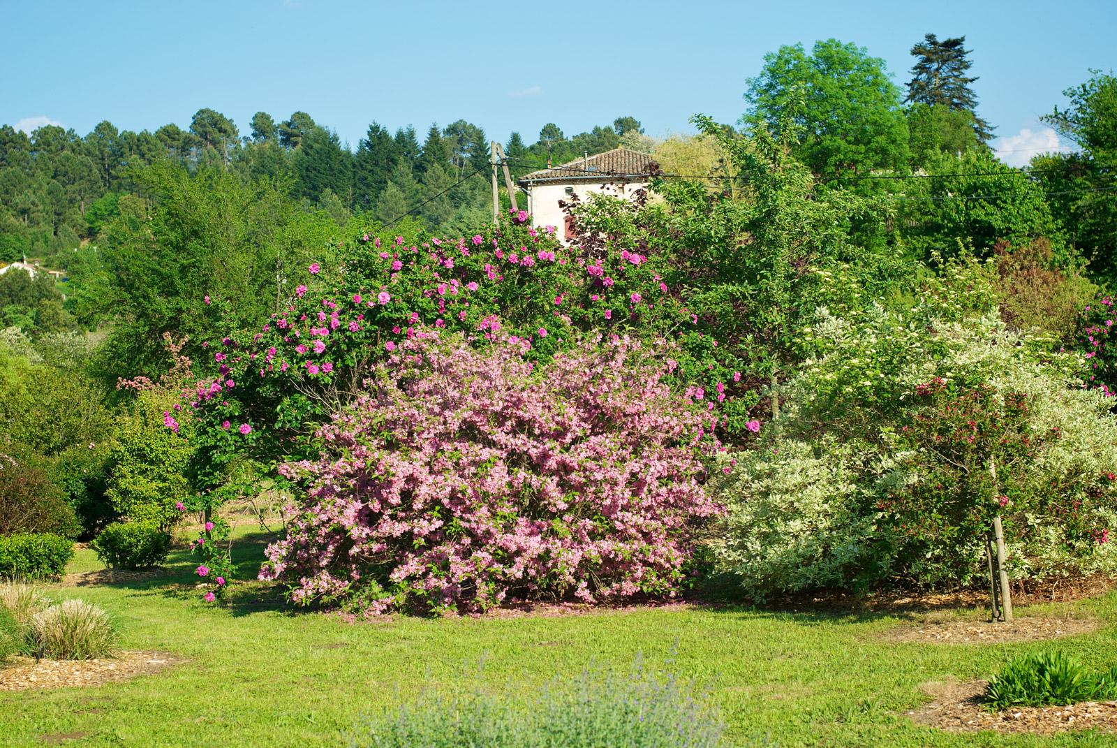 Le jardin aux milles fleurs fleurs des c vennes for Le jardin aux epilobes