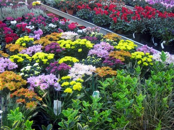 Des belles couleurs pour l'automne.