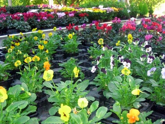 Un large choix de plantes et fleurs parfaitement acclimatées à nos Cévennes.