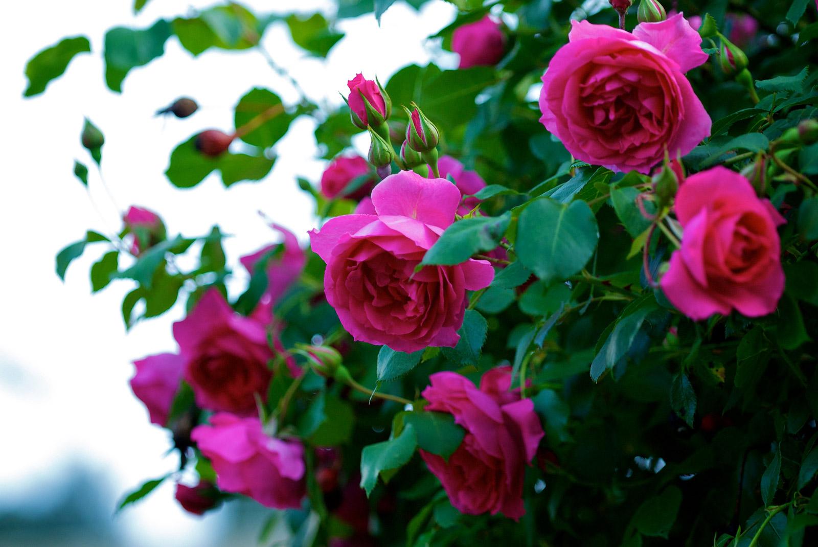 Fleurs pour balcon for Achat plantes jardin en ligne
