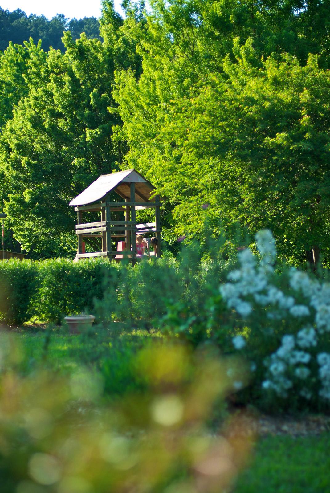 Fleurs des c vennes nos serres et notre jardin for Catalogue arbustes jardin