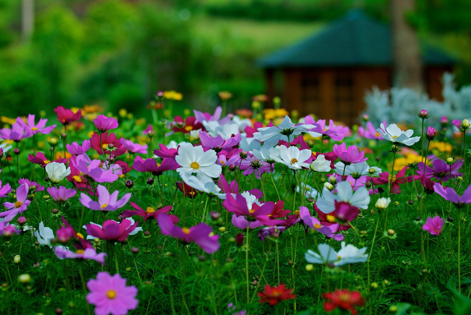 Fleurs cévenoles