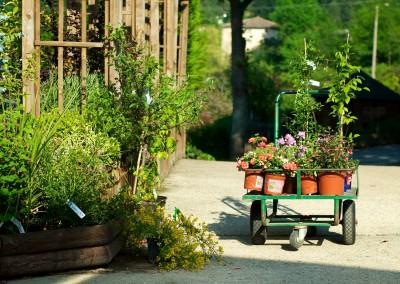Acquérir ses fleurs et plantes en Cévennes