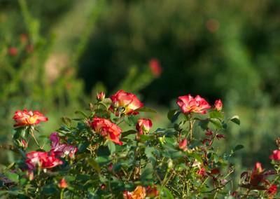 Notre jardin aux mille fleurs