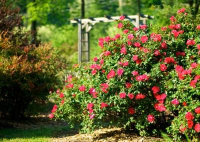 Le jardin aux milles fleurs