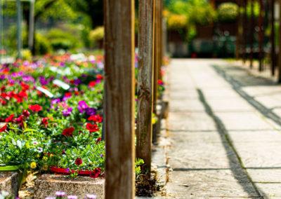 Fleurs extérieures pour décoration de jardins et maisons dans les Cévennes