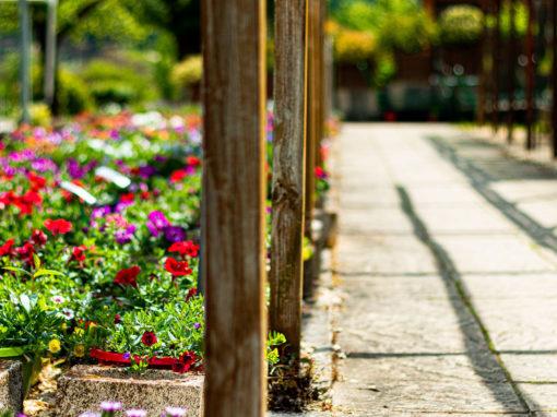 Les petits jardins autour des serres