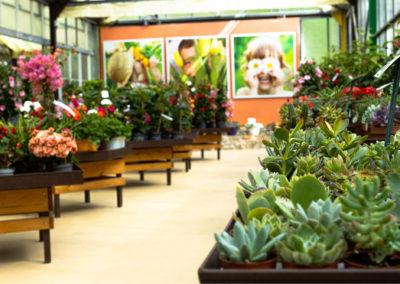 Productions de plantes 100% des Cévennes