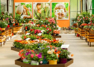 Production de fleurs 100% des Cévennes