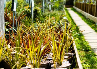 Plantes extérieures 100% des Cévennes