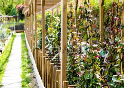 Arbustes 100% cévenol des Fleurs des Cévennes