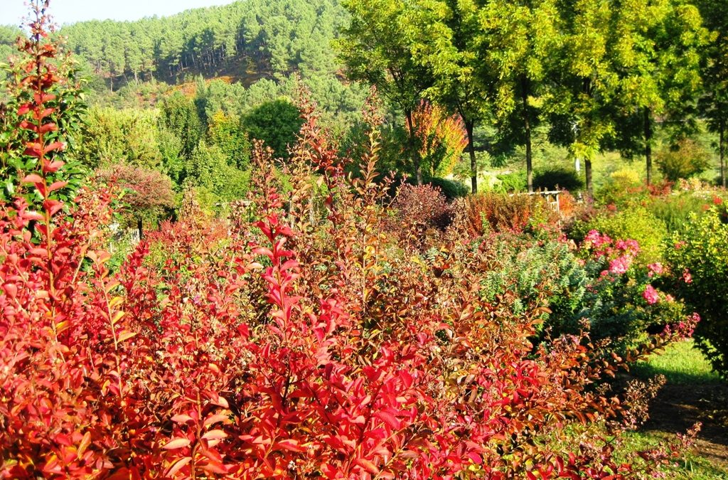 L'automne est enfin arrivé !