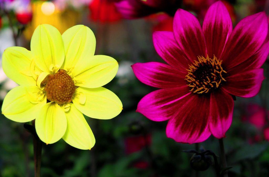 Nos conseils de jardinage pour le mois de mai