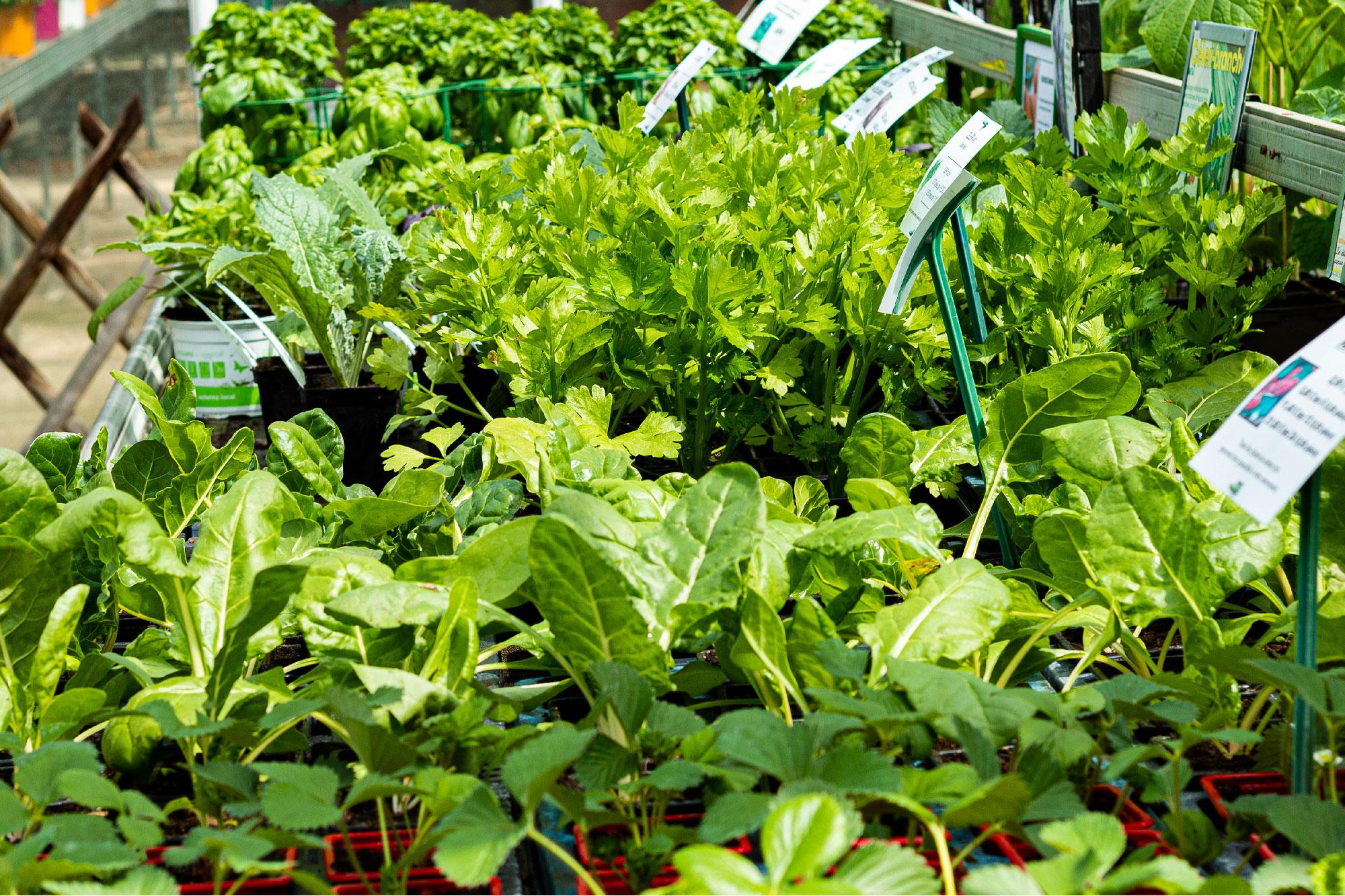 Plants de fruits et légumes produits chez Fleurs des Cévennes