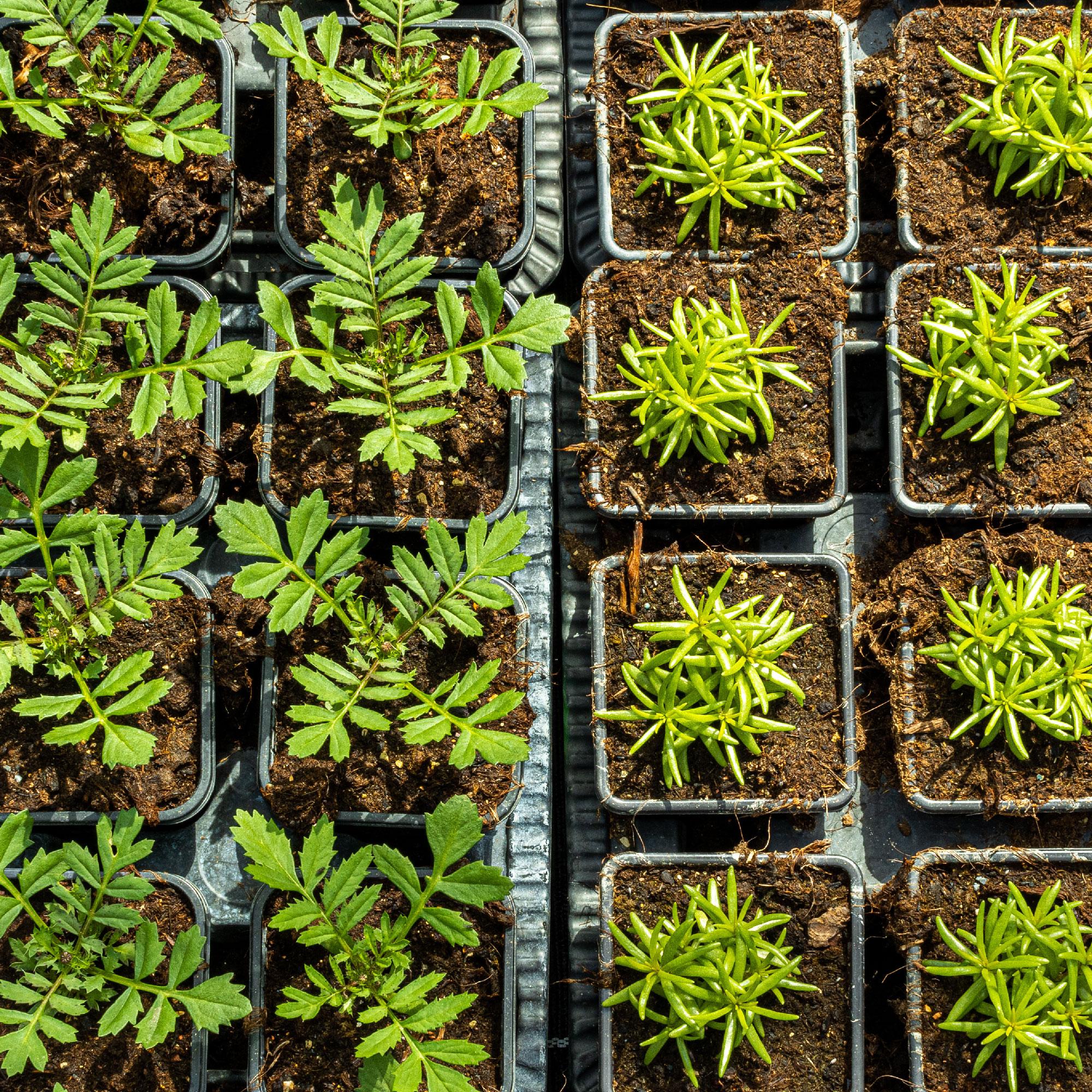 Plantation de fleurs, légumes et fruit chez Fleurs des Cévennes
